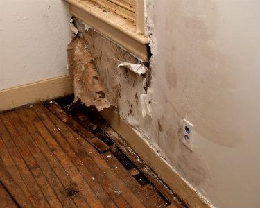 Dealing with Water Ingress and Rot